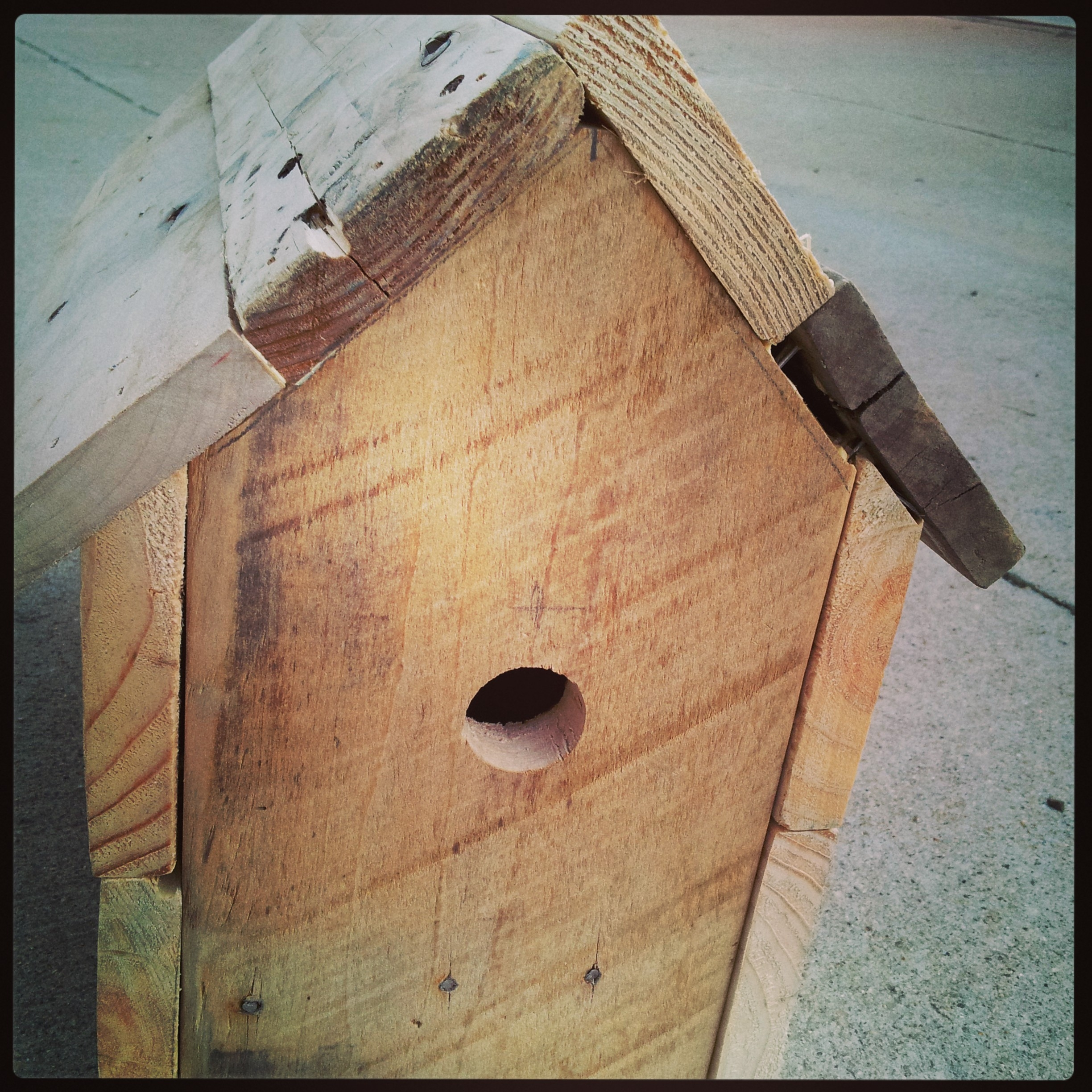 bird house plans titmouse