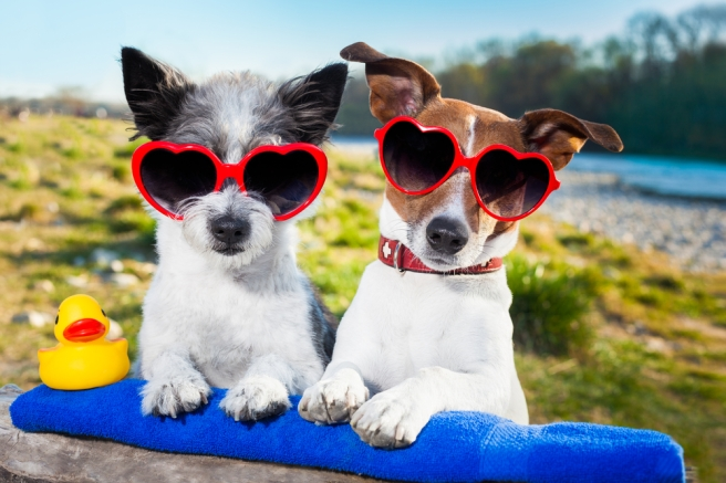 Image result for Is your dog enjoying the summer weather?